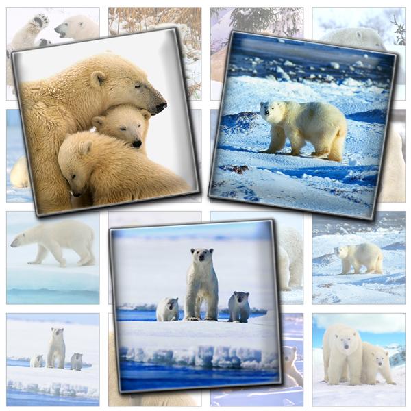 Polar Bears square printables